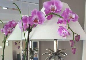 2020.09.16 Devotion - photo orchid - web